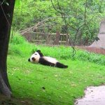 Sometimes I just wanna be a panda. http://t.co/tIAGkChujz