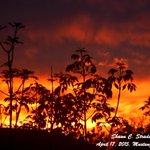 Tonights beautiful sunset in Mustang, OK. April 17, 2015. #okwx #sunset @tornadopayne http://t.co/8iwxJSb0nX