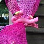 RT @ZeiglerHouseInn: #Pink #photo op →121 W Jones St, #Savannah #GA TODAY!  #breastcancer #walk #run @SusanGKomen #FB http://t.co/3rsYbNeKhJ