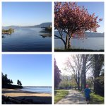 Scenes from todays 17km run #Vancouver #Kitsilano #EnglishBay #StanleyPark @runtagit #RunTagIt @ForerunnersVan http://t.co/YdTrKiLtn6