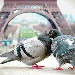 """หอไอเฟิล ที่""""ปารีส"""" อะไรๆก็ดูดีสวยงามไปหมด http://t.co/j8Uv1p7iNj"""