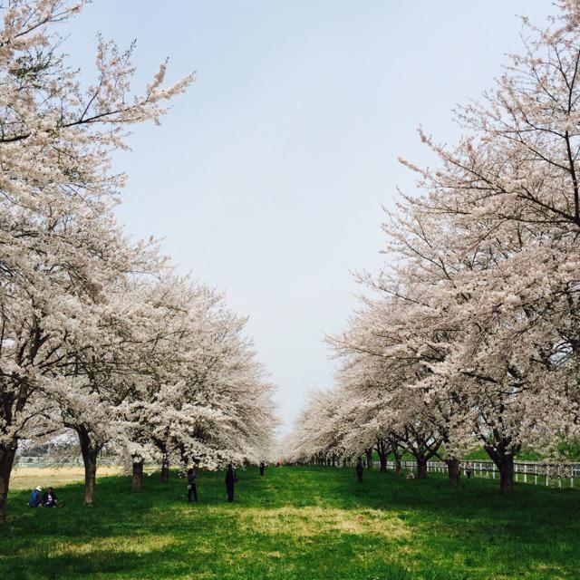 水沢競馬場ヤバい!! http://t.co/Tj0JXJUFNt