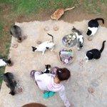 猫1「今日は魚の気分じゃないから」 猫2「これより先にドライフード食べたい」 猫3「そのお肉飽きた」 猫4「向こうの仔が食べてるのが欲しい」 猫5「これ好きじゃないって前に言ったよね」 猫6「 ・ ・ #実際に言われたクレーム晒す http://t.co/uWGQ3tkqmj