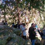 Letzte Woche hätte ein Baum fast den ganzen Pan erschlagen- so hat der Bock nur sein Ohr verloren #lustwandeln http://t.co/wocv1v5vjU
