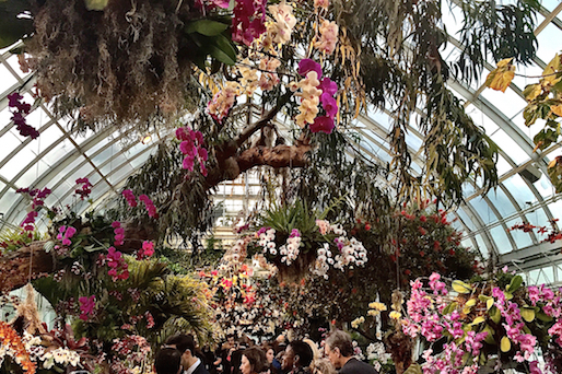 Like walking through an exotic rain forest. Join me for a visit to the @NYBG Orchid Show. http://t.co/UsGkugsFEA http://t.co/nFucwVuZEs