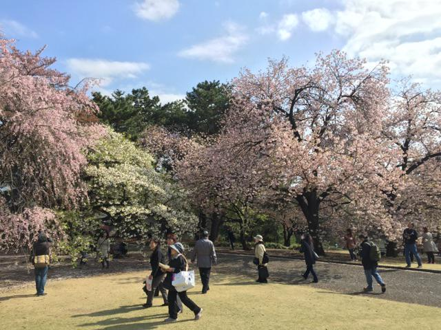 新宿御苑は染井吉野以外にもいろんな桜があるので、まだまだ花見が楽しめる。どの場所でも必ず桜が楽しめる。ここの木々の配置を作った人はほんとスゴイ。つていうかburster使い切り、やることない。 http://t.co/kEAxPLuWfQ