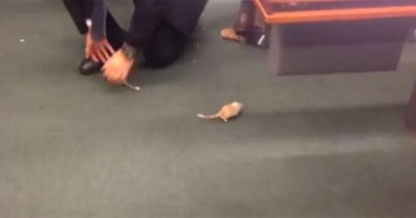 TEMPO REAL: Homem solta ratos no Plenário e tumultua sessão da CPI da Petrobras http://t.co/mYJqaqWaCH  #G1 http://t.co/LwGaw5HLDJ