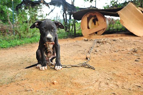 April is National Dog Fighting Awareness Month! Help end this! Learn more here: http://t.co/cf1UnU5nrv #gettough http://t.co/XnuvLBca0L