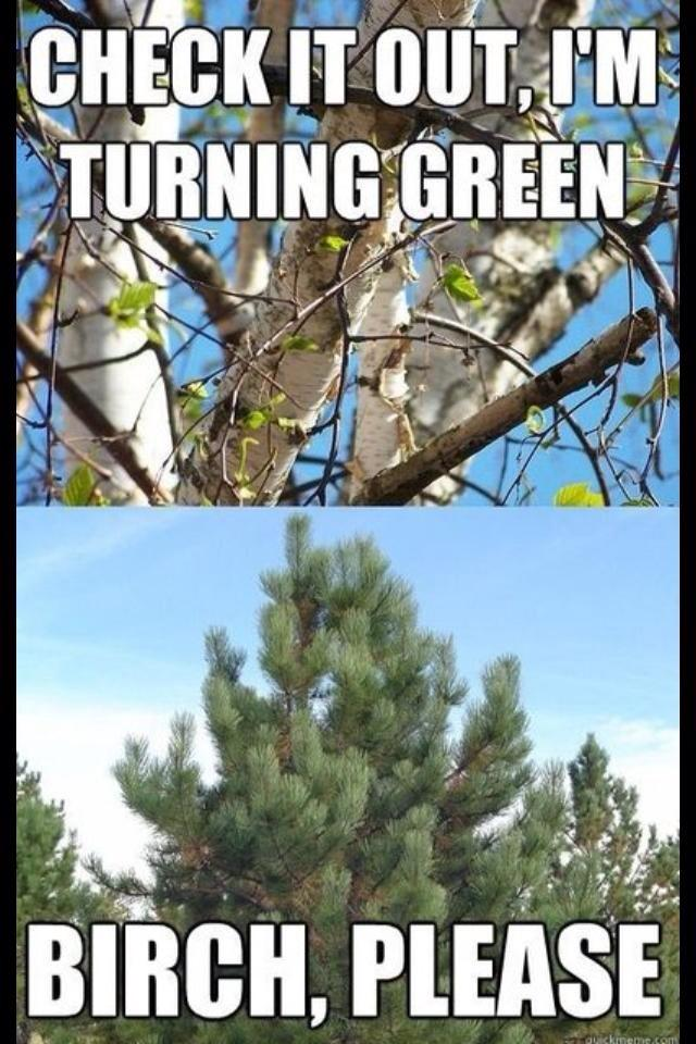 EPIC TREE BATTLES We Have To Side With The Conifer On This One Because