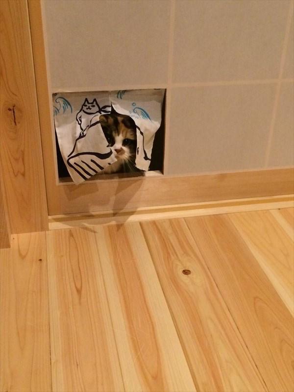 閉めているとネコが障子を破るので、いっそ暖簾にしてみたところ…。 http://t.co/SiI9Fbs6Ae @buzzmag_jpさんから http://t.co/xL5AiTgifz