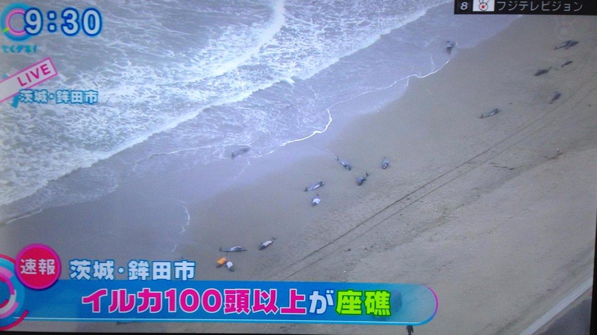 【速報】 茨城県鉾田市でイルカ 100頭以上が座礁(マスストランディング)状態。救助を求めています。 http://t.co/EaneAbzWDm