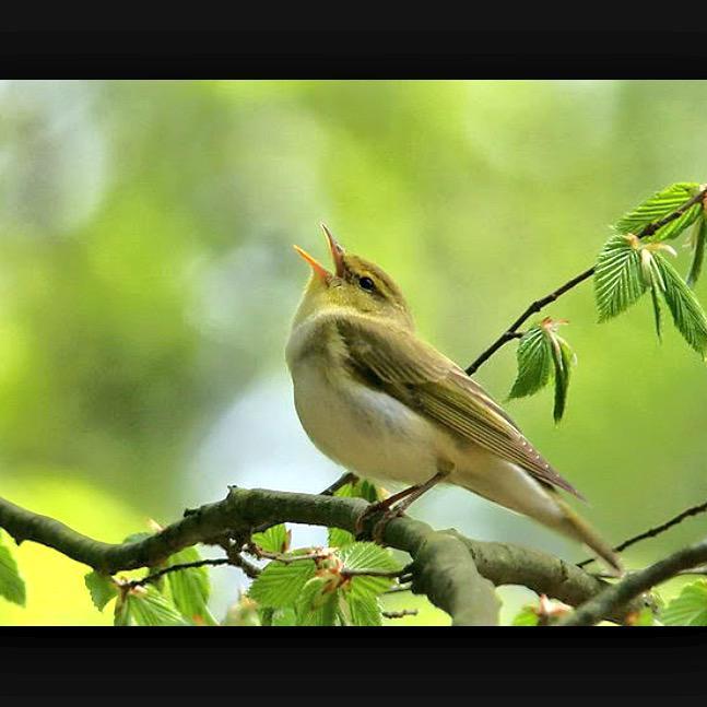 Песня мы уже не птенчики мы птицы скачать