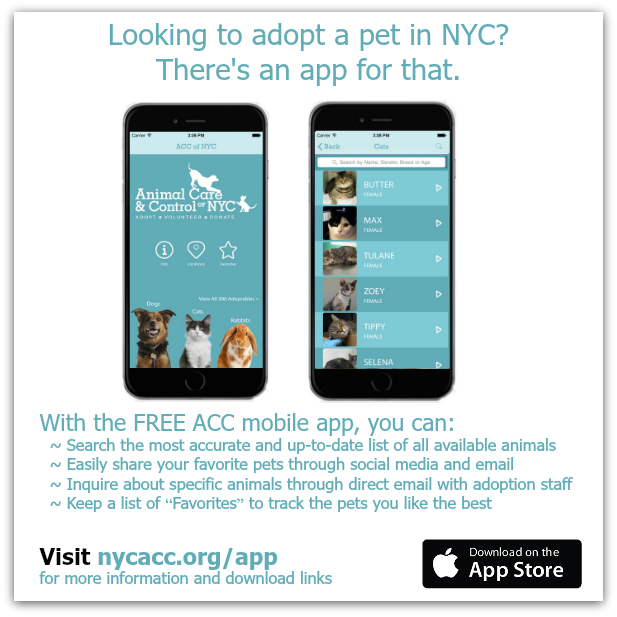 The @NYCACC App for iPhone! Finding/sharing animals looking for homes easier than ever ~ http://t.co/220iFUqb5p http://t.co/z9WeUl7n2z