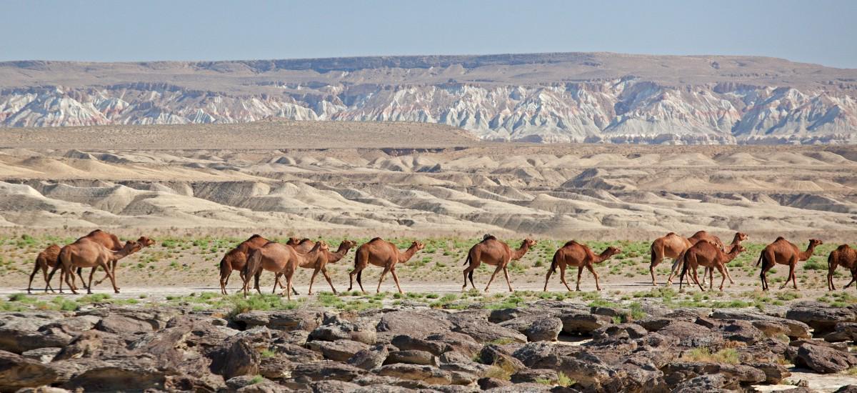 Go on a Great Silk Road Tour Through Uzbekistan.