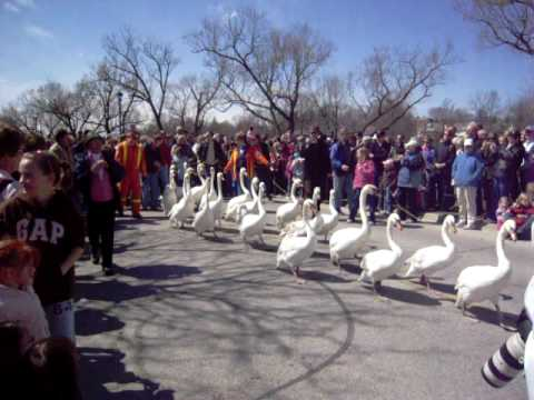 Looking forward to @StratfordON Swan Parade at 2pm today https://t.co/SdJ8MZlLsj http://t.co/NtfTOcfE4l