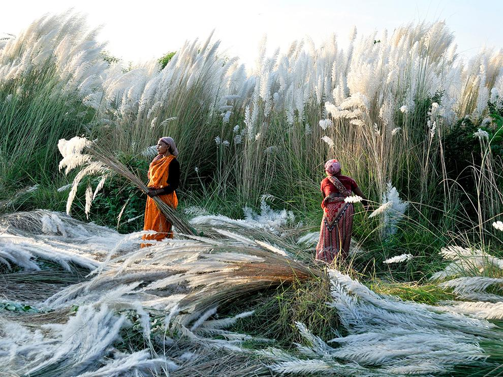 esthet:  Kash Harvest, India   Photograph by Biswajit Patra http://t.co/mjJGXJilAW