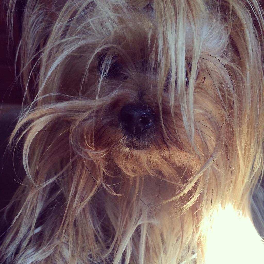 Perro mas dulce del Mundo. #AlfieMillan http://t.co/MYRiOsRf30