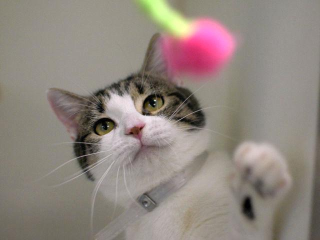 Save SWEETIE-PIE CINDY She loves Play &enjoys Petting #ADOPT FOSTER PLEDGE #NYC http://t.co/aFncCxCndF … … … http://t.co/qmgdvKQfcY