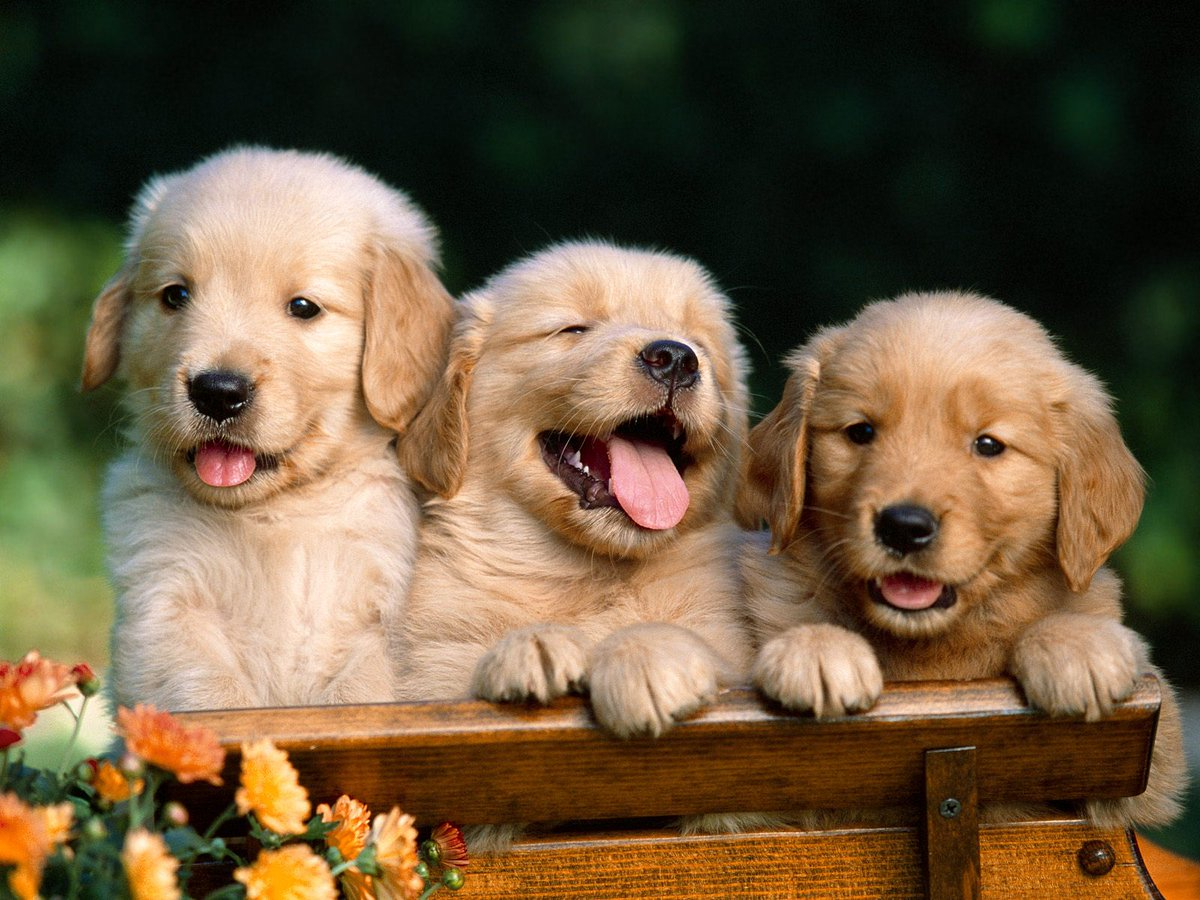 Puppy room coming to Portland Atrium on 1st May to help relieve exam stress. Thank you @UoN_LawSoc! #WellnessWeek http://t.co/lVHi8ezG8B