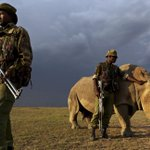 RT @NYDailyNews: The world's last male northern white rhino now has four armed bodyguards http://t.co/RDErcFumBJ (Photo: @Caters_News)