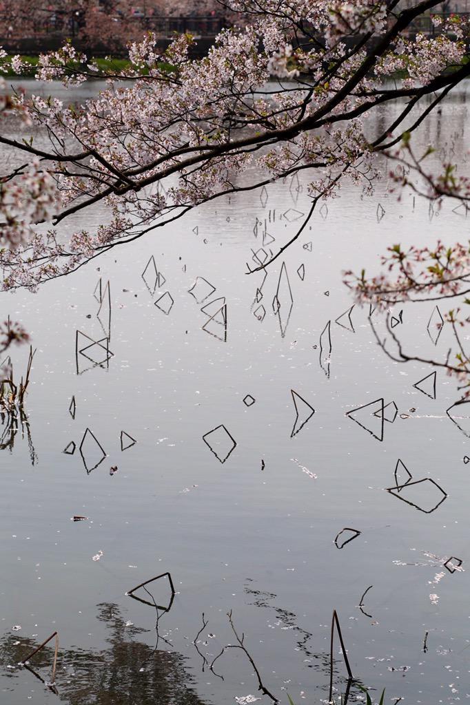 折れた蓮の茎が面白い模様を描いてた http://t.co/WnA2ELiEfB