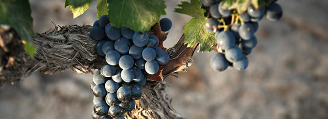 The top 10 best-value Malbecs in time for @MalbecWorldDay 2015 http://t.co/di1zjO7Meb http://t.co/LMINyMJRgE