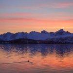 Solnedgangen i #Tromsø torsdag var magisk. Sjekk bildene http://t.co/FNDMQ1JGOp #våritromsø http://t.co/oEBe9UcRMF