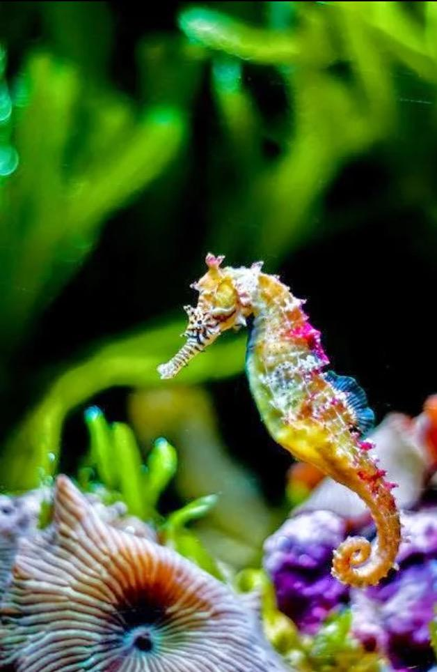 RT Check out this amazing seahorse picture by Lisa Tally . Thanks for sharing @MaduroDive http://t.co/rmcffCHZs0