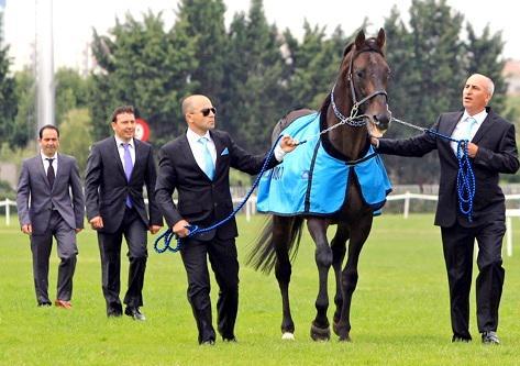 Atahan Zilcioglu ®  (@Atahanzilcioglu): TRIPLE CROWN sahibi şampiyon BOLD PILOT öldü… http://t.co/DapPBEyIQp http://t.co/Wa2qA3xMaK