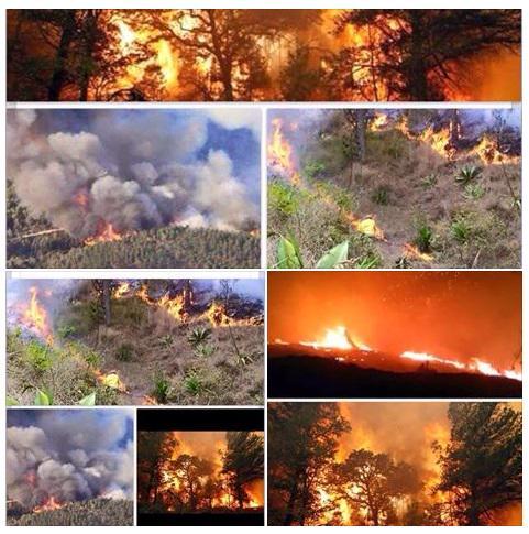 El fuego en Constanza es una emergencia nacional, esperarán a que venga una lluvia y lo apague? Será muy tarde. http://t.co/a5tubtjJI8
