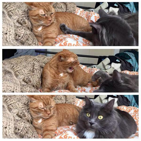 When you check to see if your girlfriend is still mad at you http://t.co/oXpxZT1XXK