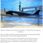 #FREEMORGAN https://t.co/G1ghfSq1SQ The Ocean Wants Her #Blackfish Back https://t.co/VwEzpzS3U0 We need 2get off our ass-campaign~JMCousteau