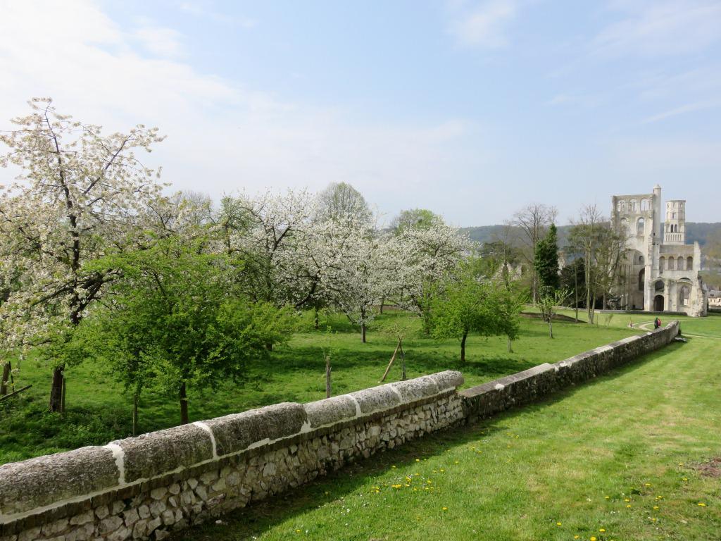 RT @AbbayesNormande: Ls pommiers de la route ds fruits autour abbaye #Jumièges st en fleurs! Bon moment pr visiter l'abbaye #SeineMaritime http://t.co/loqbC0Qgj2