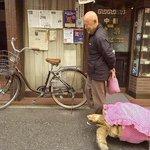 Un hombre pasea a su enorme tortuga por las calles de Tokio [Blog Esto No es Noticia] http://t.co/kOEhjodOQQ http://t.co/hjevLa069t
