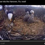 WATCH: 8 adorable videos from the Hanover #eaglecam http://t.co/Ibl3VrbsOn @theeveningsun @ydrcom #cute http://t.co/1wFmScPSvt