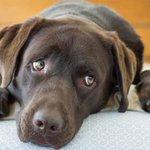 Sabe aquele olhar de coitadinho que seu cachorrinho faz? Ele pode ser proposital - http://t.co/u3fRXn9MoX http://t.co/3Fau1ewyRu