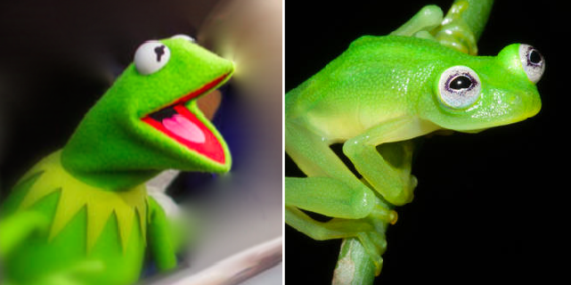 New species of frog discovered in Costa Rica looks just like @KermitTheFrog: http://t.co/UfHz6IaXvi