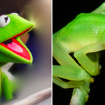 """""""@CBSNews: New species of frog discovered in Costa Rica looks just like @KermitTheFrog: http://t.co/hCJ3TL7JrF http://t.co/NE6KSTvHAF"""""""