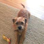 Lost dog Scarlett. Last seen on Sunset and 7th. Super friendly, pls RT @Venice311. If found, pls call 646-643-9052 http://t.co/BWvjxPu737