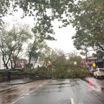 Surry Hills getting its fair share of damage from the storm - Foveux and Crown St intersection @smh http://t.co/1QC4tuouRq