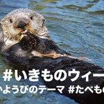 #いきものウィーク 2日目もたくさんの動物園や水族館からのツイートを頂戴できますように。今日の日替わりハッシュタグは #たべもの です。どの動物や魚がどんなものを、どのように食べているかなども教えていただけるといいですね。 http://t.co/tM8pMsqCtg