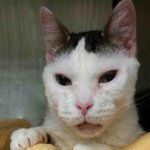 ! LUCKY - A1032957 -  *** TO BE DESTROYED 04/21/15 *** LOVELY LADY LUCKY SUPER FRIENDLY ... - http://t.co/lMKN3b0qfj http://t.co/rmpVpqrMgJ