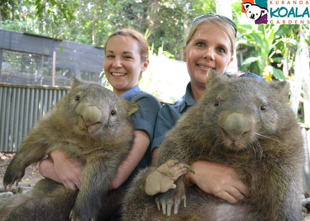 @tropicalzoojp: 飼育員ガールズと記念撮影♪カメラ目線いただきました(笑) #オーストラリア #ケアンズ #ウォンバット #動物園 #トロピカルズー http://t.co/puKwbf9YhQ http://t.co/PKISpkNa9e
