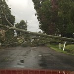 Trees down in Berkeley Vale on the Central Coast. Pic via Rachael Elcoate. #NSWWeather #9News http://t.co/UVabLoH2y0