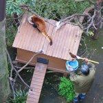 子育ての極意~。食べてる隙に掃除だ~。#いきものウィーク #たべもの http://t.co/c8wJ1qNjF2