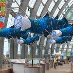 アクアマリンふくしまオリジナル・シーラカンスのぼり登場! シーラカンスの世界コーナー前で泳いでいます。25日からの展示でしたがちょっと早めに設置しました。 #いきものウィーク #シーラカンス http://t.co/q6YDuB78F2