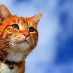 猫だらけの展覧会「人生はニャンとかなる!」- 埼玉・千葉・大阪で開催 http://t.co/OB8sJdcwhf http://t.co/yIrHsWud3e