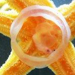 じゃあヒトデはなにを食べるの?…というと貝や死んだ魚など。ヒトデの口はお腹側中央にあります。写真のように、胃を反転させて口から出し、餌を包みこんで消化・吸収。葛西臨海水族園にて。※写真の白い円は餌容器。 #いきものウィーク #たべもの http://t.co/Bz51wfk2fM