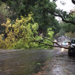 A tree has just fallen at Ithaca Rd in Sydneys Elizabeth Bay, fully blocking traffic in both directions. @abcnews http://t.co/Jso4K9aMHS