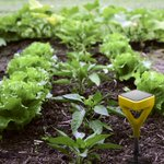 Designed by Yves Behar, this soil sensor gives plant recommendations and customized tips http://t.co/pfPTexsV6s http://t.co/9p1EL2jrb0